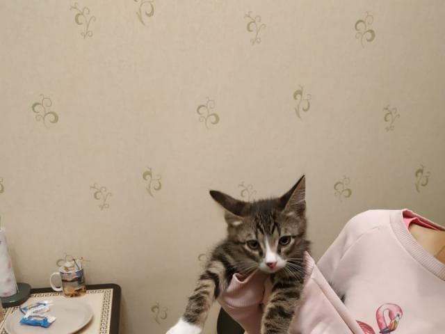 Кошка.  Беспородные и метисы . Отдам в дар в Домодедово