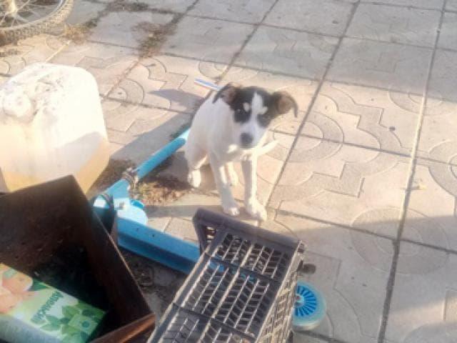 Собака.  Бeспородные и метисы . Продаю в Екатеринбурге