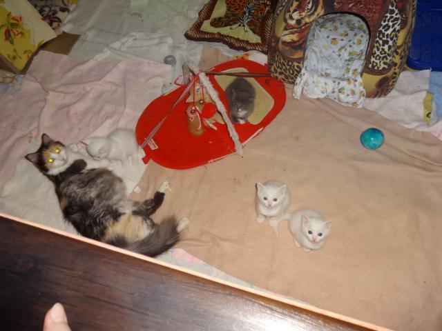 Кошка.  Беспородные и метисы . Продаю в Киеве