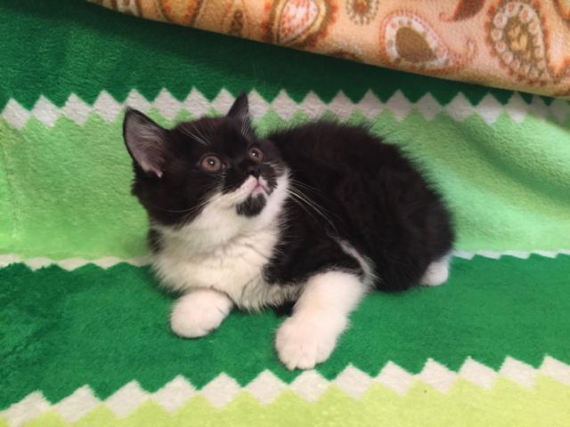 Отдам в дар: Кошечка в добрые руки фото3