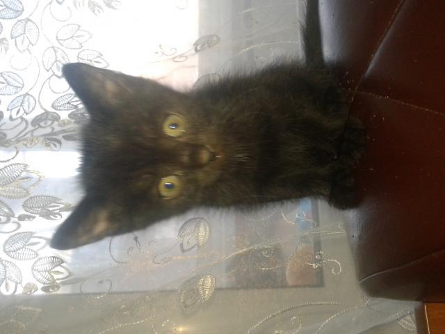 Отдам в дар: котята фото3