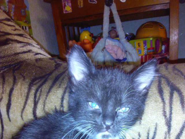 Отдам в дар: котята ищут новых хозяев