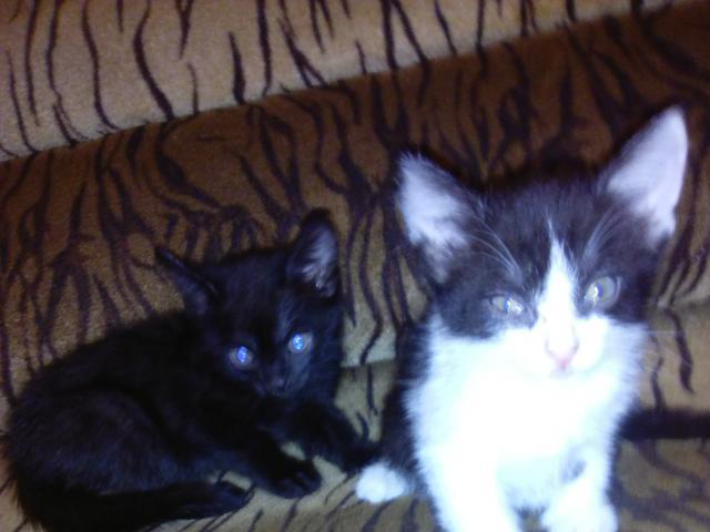 Отдам в дар: котята ищут новых хозяев фото2