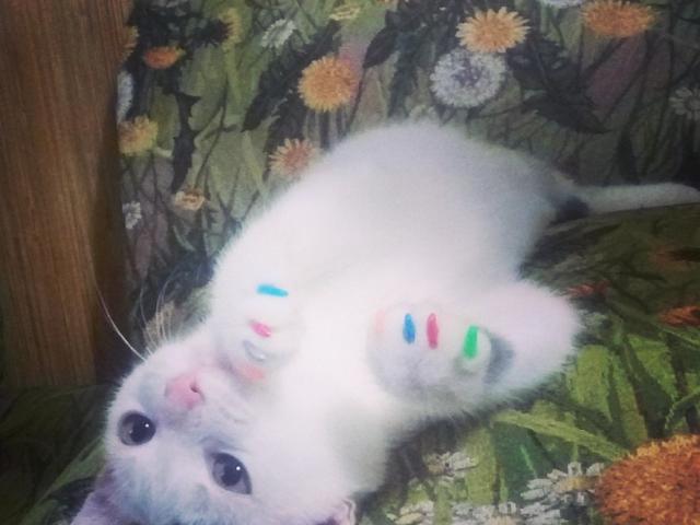 Отдам в дар: Очаровательный котеночек ищет дом