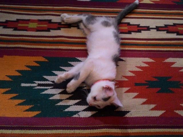 Отдам в дар: Очаровательный котеночек ищет дом фото2