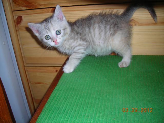 Отдам в дар: Кошке нужны внимательные хозяева  фото2