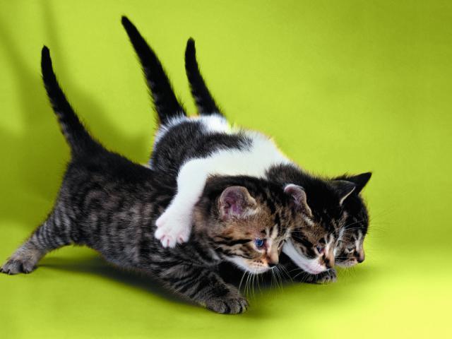outdoor cat tunnel for indoor cats