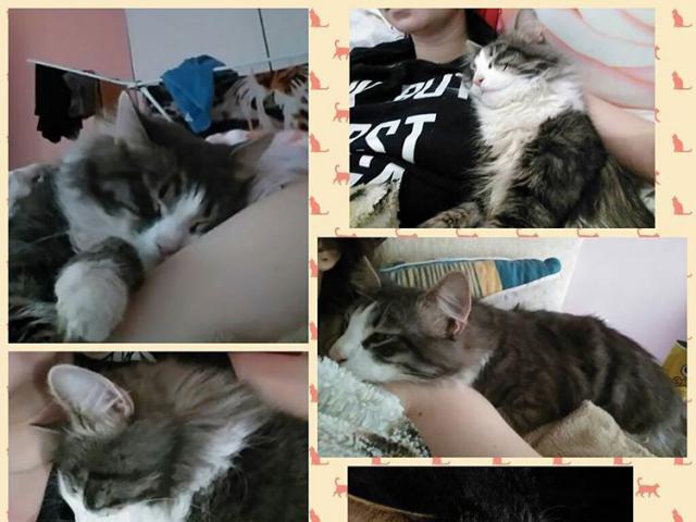Потерялся/Нашелся: Пропал кот со двора частного дома фото3