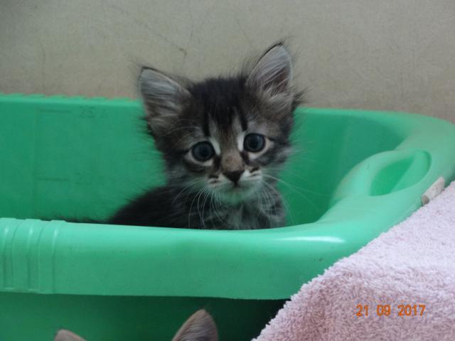 Отдам в дар: Отдам котят фото3