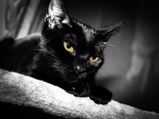 Отдам в дар: Котенок Багира ищет своих родителей