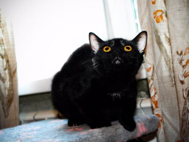 Отдам в дар: Котенок Багира ищет своих родителей  фото3