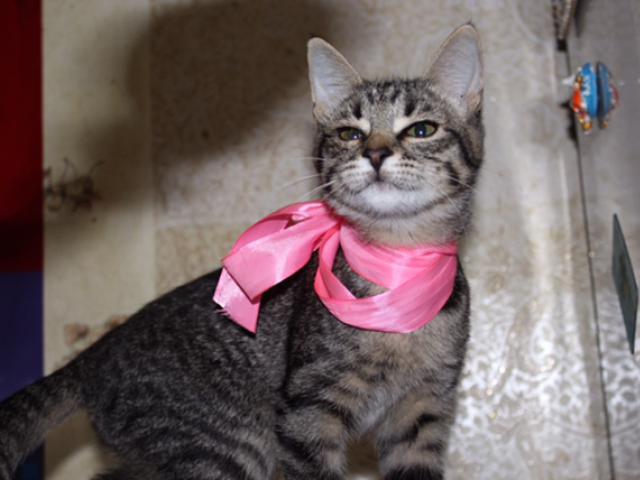 Отдам в дар: Ищет дом котенок Матильда