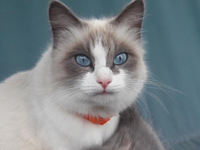 Отдам в дар: Кошка и котенок