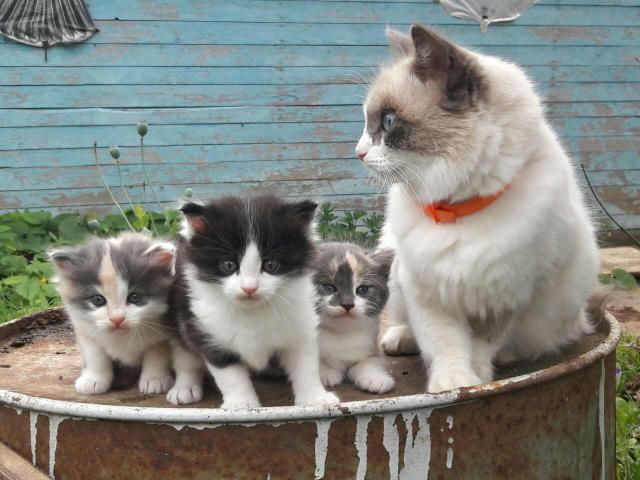 Отдам в дар: Кошка и котенок фото2