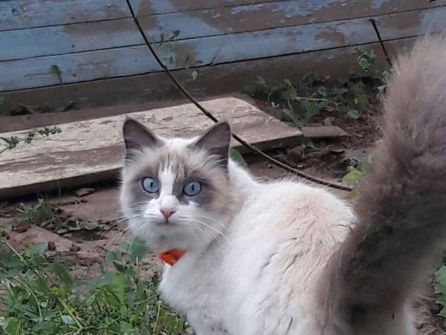 Отдам в дар: Кошка и котенок фото3