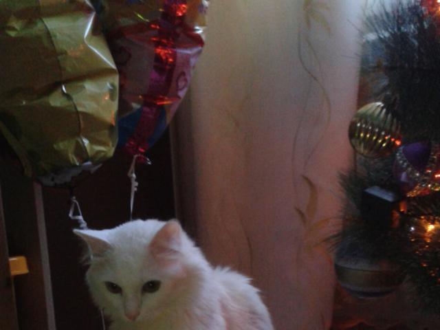 Отдам в дар: Потерялся кот