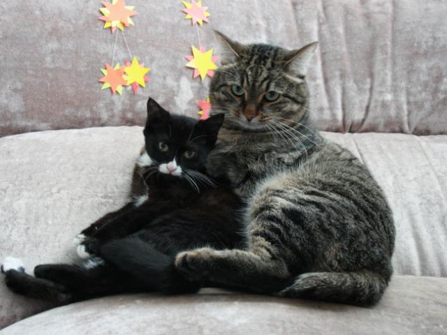 Отдам в дар: Молоденькая кошечка Вакса в дар фото3