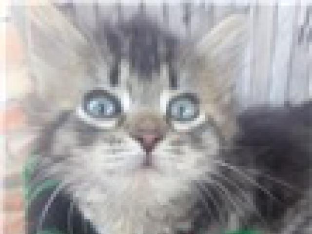 Отдам в дар: Котята от кошки-мышеловки