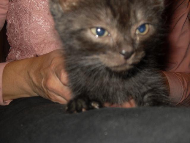 Отдам в дар: замуррчательный котенок  фото3