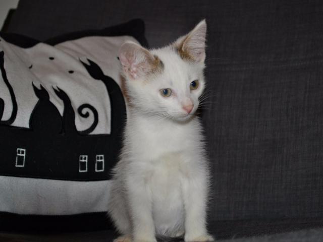 Отдам в дар: Котенок Ник в добрые руки