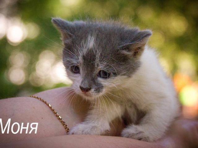 Отдам в дар: Котенок Моня в добрые руки, в дар
