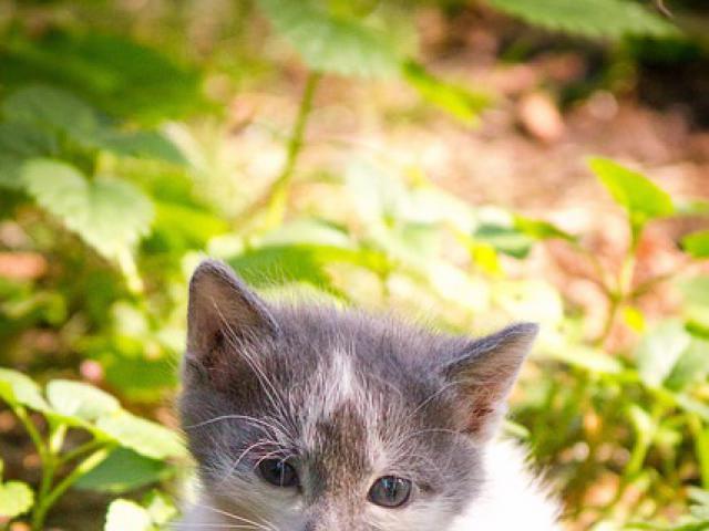 Отдам в дар: Котенок Моня в добрые руки, в дар фото2