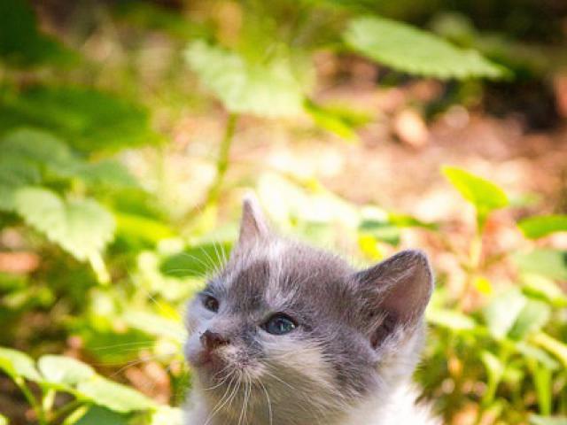 Отдам в дар: Котенок Моня в добрые руки, в дар фото3
