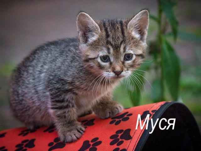 Отдам в дар: Котенок Муся в добрые руки, в дар