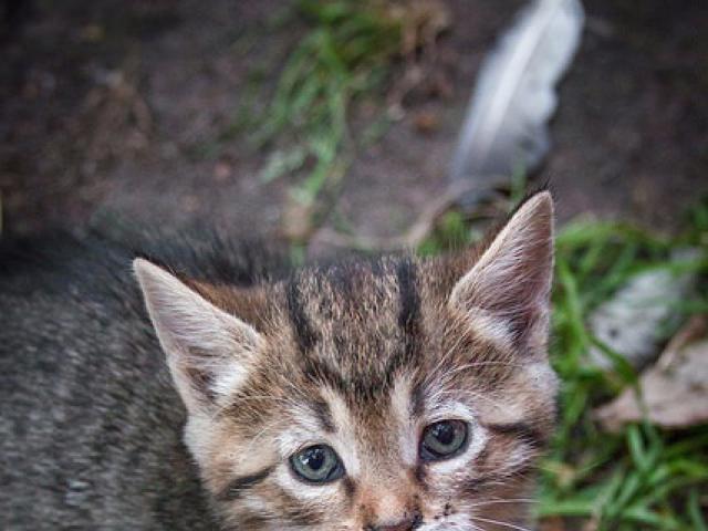 Отдам в дар: Котенок Муся в добрые руки, в дар фото3