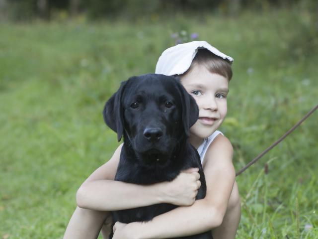 Продаю: Подрощенные щенки Лабрадора черные 5мес, питомник