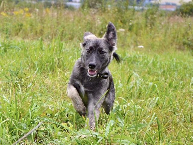 Отдам в дар: Чудесный щенок Киви в добрые руки