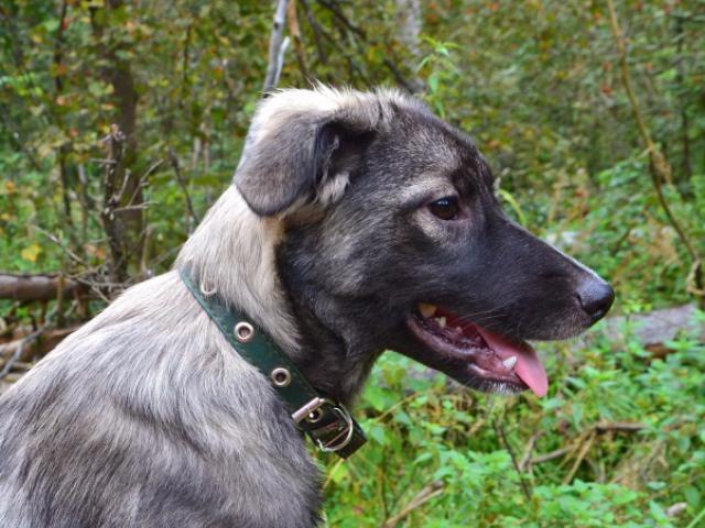Отдам в дар: Чудесный щенок Киви в добрые руки фото2