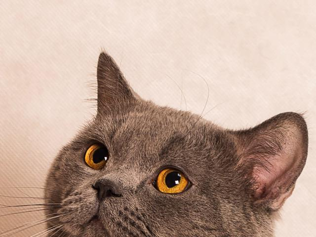 Вязка: Кот для вязки фото3