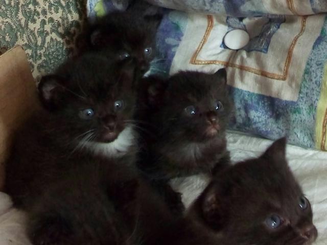 Отдам в дар: Котята в дар