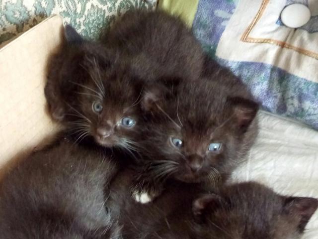 Отдам в дар: Котята в дар фото2