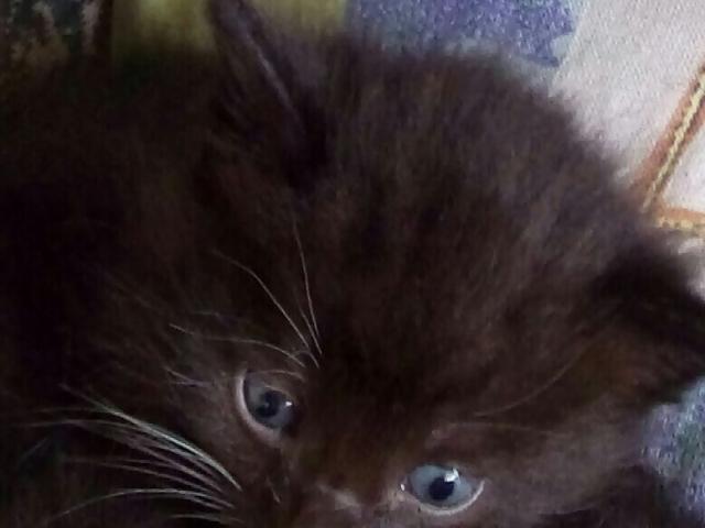 Отдам в дар: Котята в дар фото3