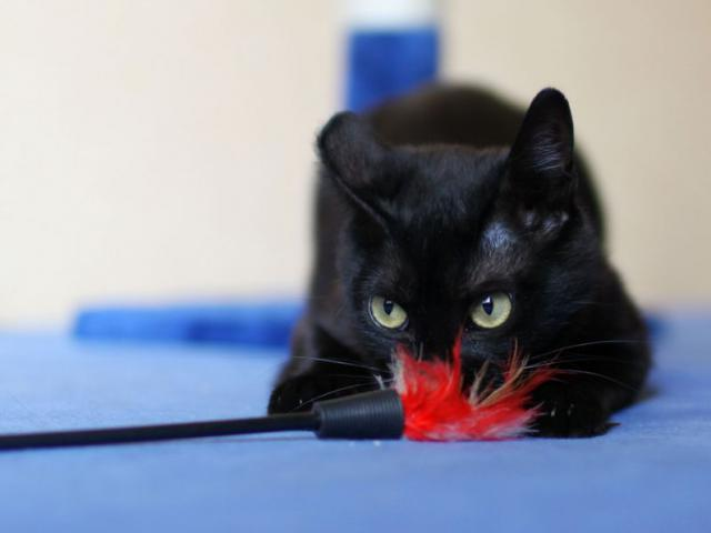 Отдам в дар: Москва и Реутов Черный кот по имени Чарли)