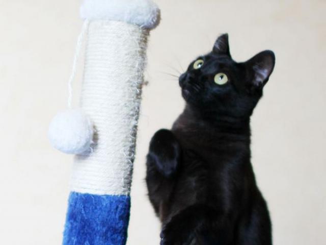 Отдам в дар: Москва и Реутов Черный кот по имени Чарли) фото3