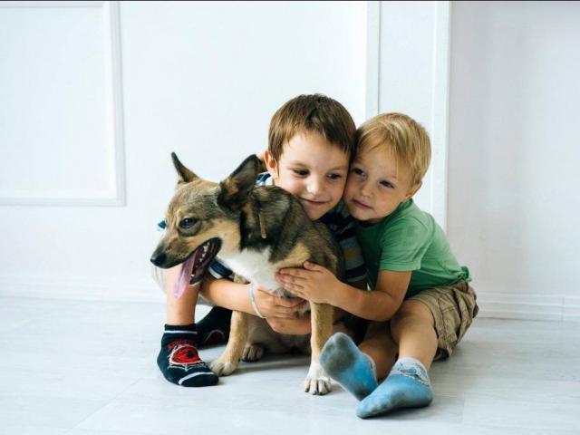 Отдам в дар: Умница Жужу ищет семью, лучше с детьми  фото3