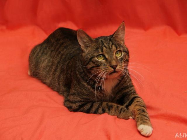 Отдам в дар: Настоящий кот Барон в добрые руки фото2