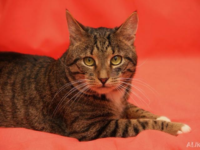 Отдам в дар: Настоящий кот Барон в добрые руки фото3