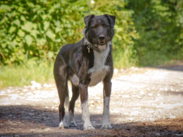 Отдам в дар: Чудесный пес Берт в добрые руки
