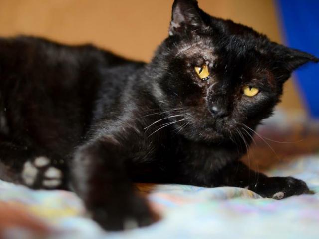 Отдам в дар: Настрадавшийся кот Лео в добрые руки