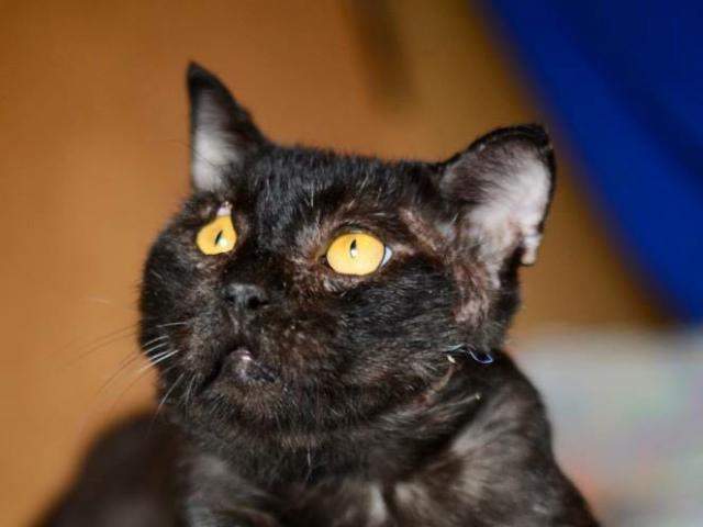 Отдам в дар: Настрадавшийся кот Лео в добрые руки фото2