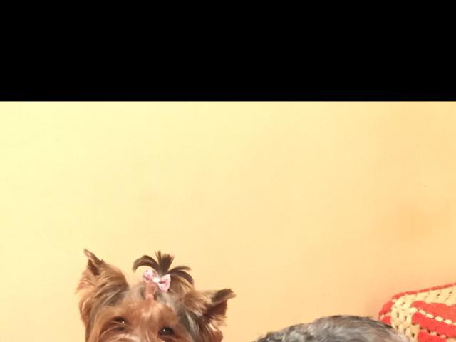 Отдам в дар: Потерялась собака  фото2