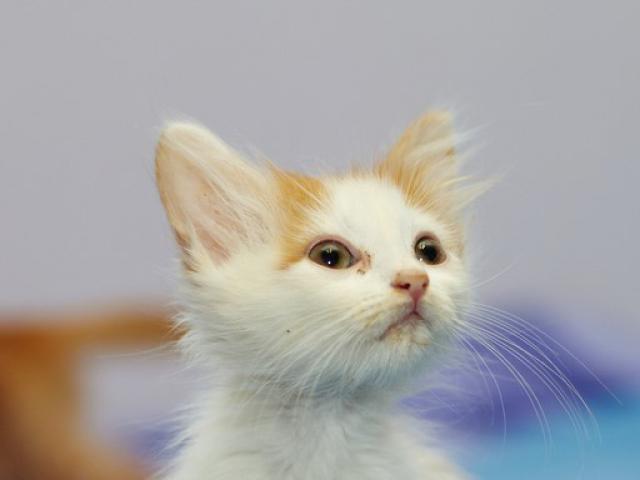 Отдам в дар: Котенок Павлик в добрые руки фото2