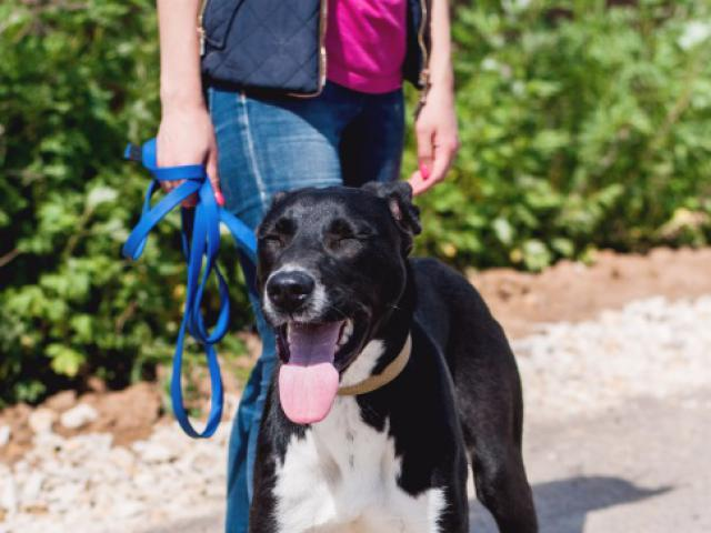 Отдам в дар: Очаровательный щенок Бони в добрые руки фото3