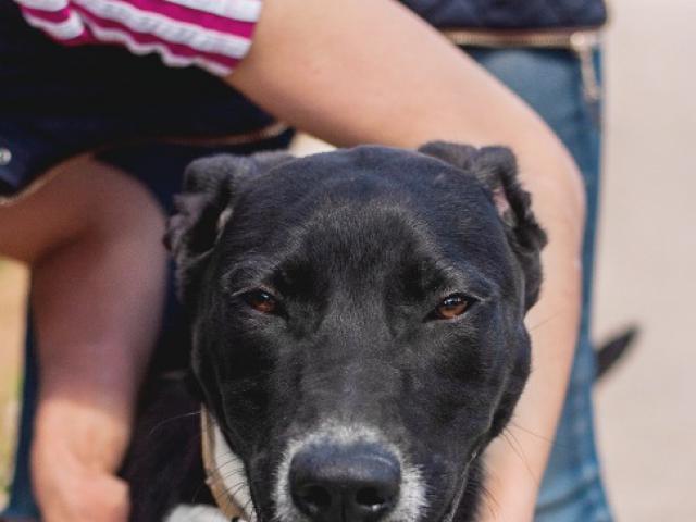 Отдам в дар: Очаровательный щенок Бони в добрые руки фото4