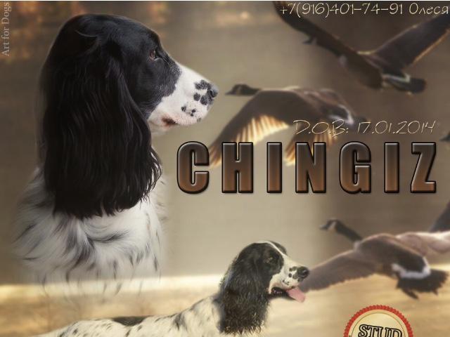 Продаю: русского спаниеля щенки от рабочих собак фото2