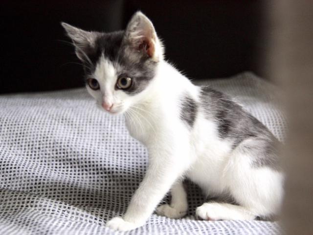 Отдам в дар: Чудесный котенок Кэсси в добрые руки